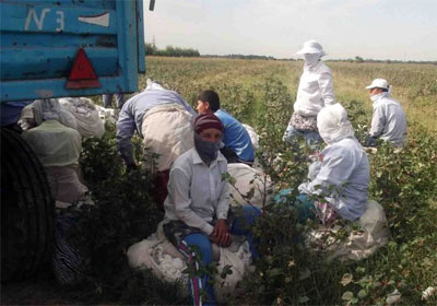 World's Largest Retailers Take Stand Against Forced Labor in Uzbek Cotton Harvesting | RSN