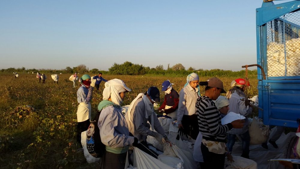 2014 Uzbekistan Cotton Harvest Audio & Photo Update
