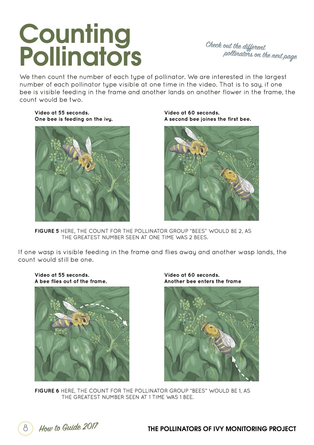 ThePollinatorsofIvyMonitoringProject_HowToGuide_April2017_DraftPages.jpg