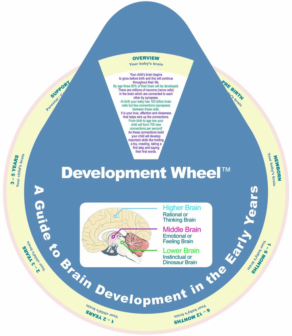 A guide to brain development in the early years.jpg