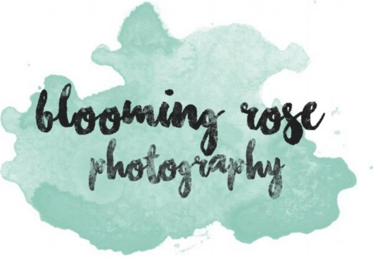 blooming rose photography