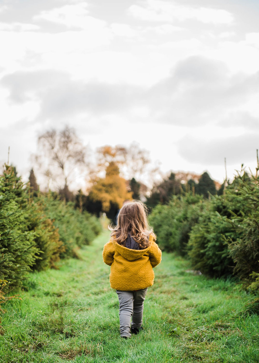 Christmas Tree Farm toddler_CheltenhamPhotographerChuiKingLi-0610.jpg