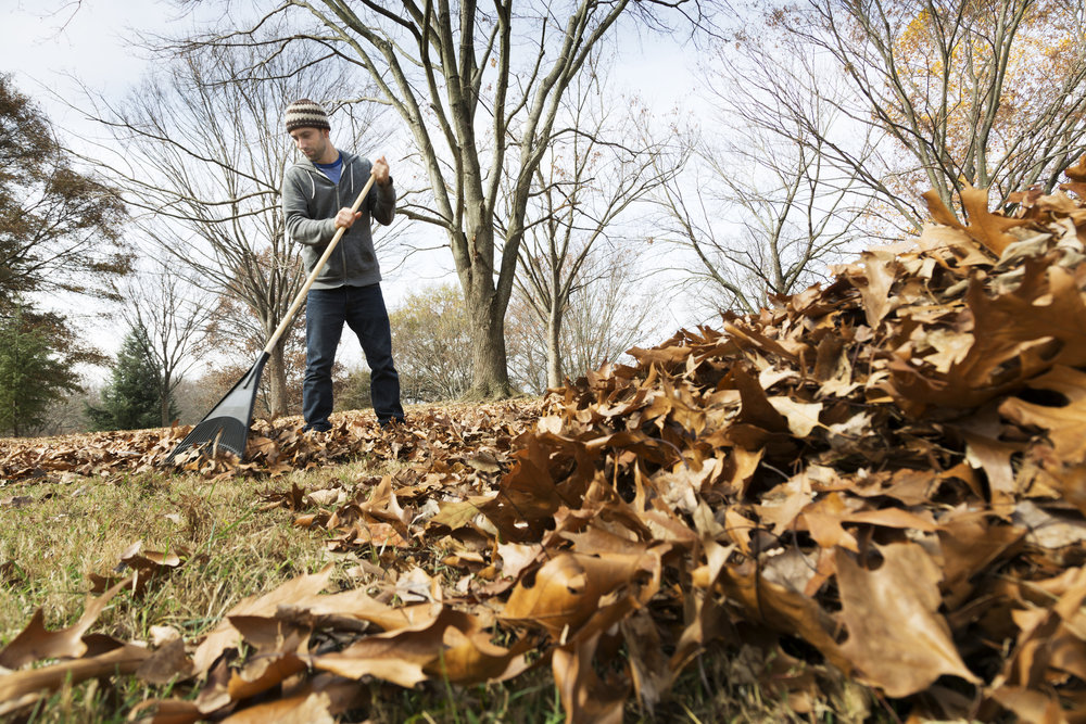 Seasonal Yard Work -
