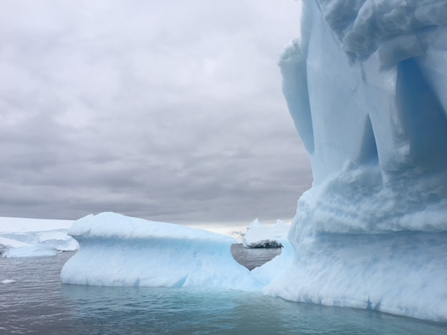 Gorgeous Iceberg_c_Homeward Bound.jpg