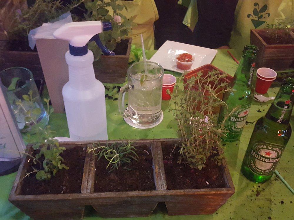 Plant Nite Herb Garden in Three Drawer Planter 2.jpg