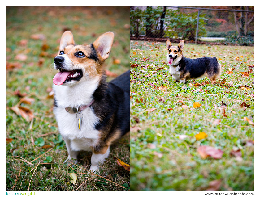 Atlanta dog photographer pet photography