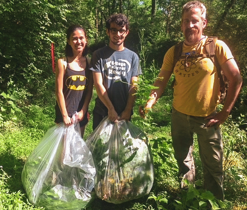 Cuyugan, left, along with Koushkabaghi, worked with Motlow Associate Professor Kevin Fitch, far right, to pull up the plant by hand and then bag it to prevent any seeds from being distributed.