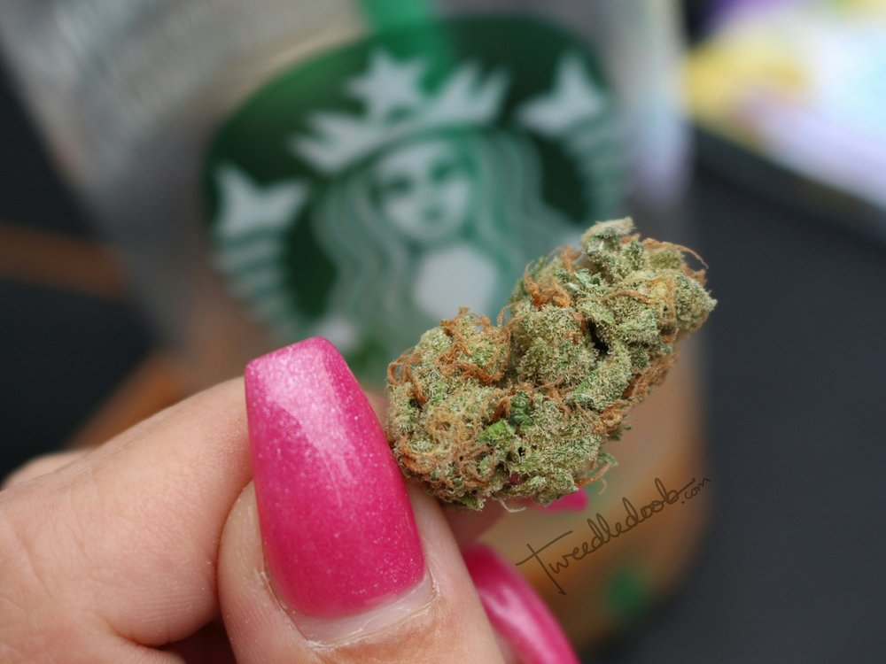 sativa4starbucks.jpg