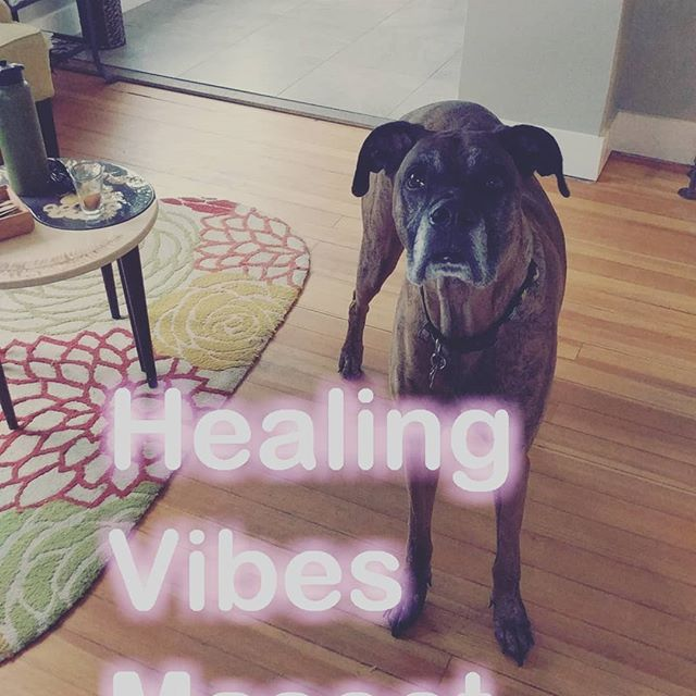 Happy Friday!  Buddha loves Acupuncture! #acupuncture #greatdane #doglover #denver