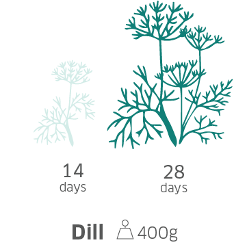 TM10-Dill@2x.png