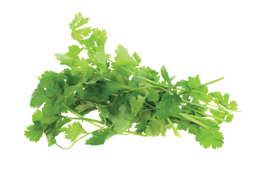 PP-Offerings-Cilantro & Parsley@2x.png