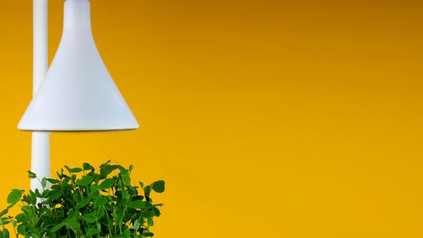 yellow-header.jpg