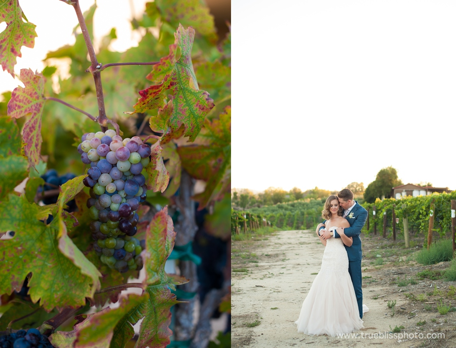 Callaway Winery Wedding