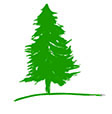 Green pine tree illustration