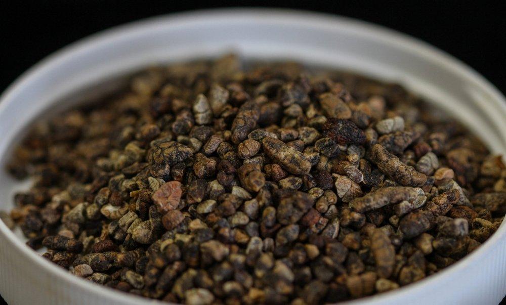 Cardamom seeds (Elettaria cardamomum)