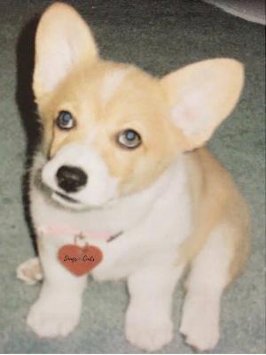 Ginger Gurlas a pup -