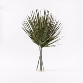 palm leaves.png