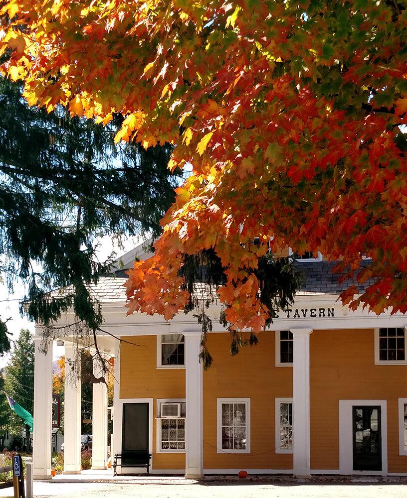 foliage-from-north-driveway-napa.jpg
