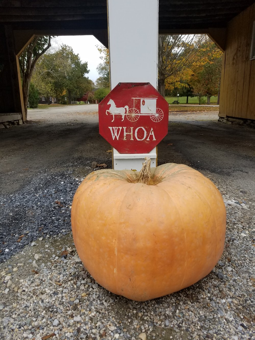 whoa sign with huge pumpkin oct 2017.jpg