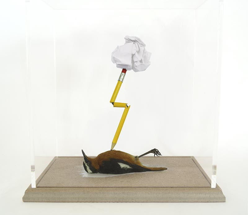 Morgan Polly A Reluctant Mind (Robin-Chat) 2016 Taxidermy Robin-Chat.jpeg