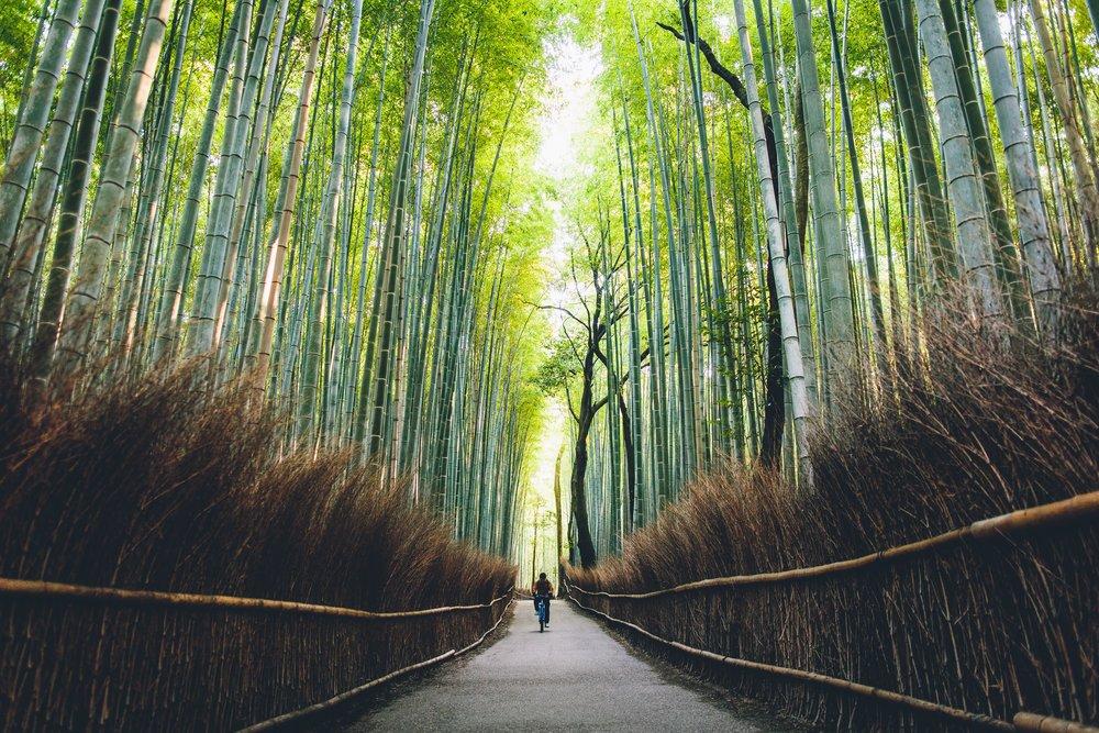Places - JAPAN-13.jpg