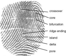 fingerprint_definition.jpg