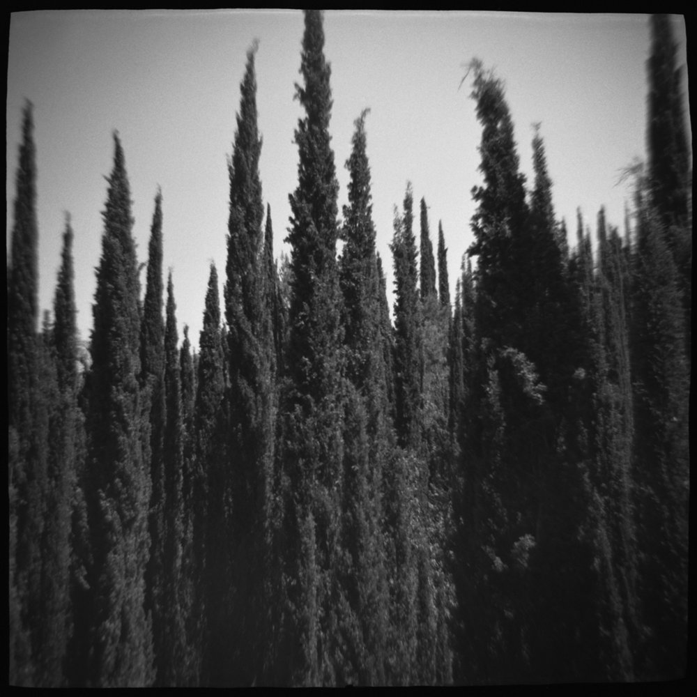 cypress forest low.jpg
