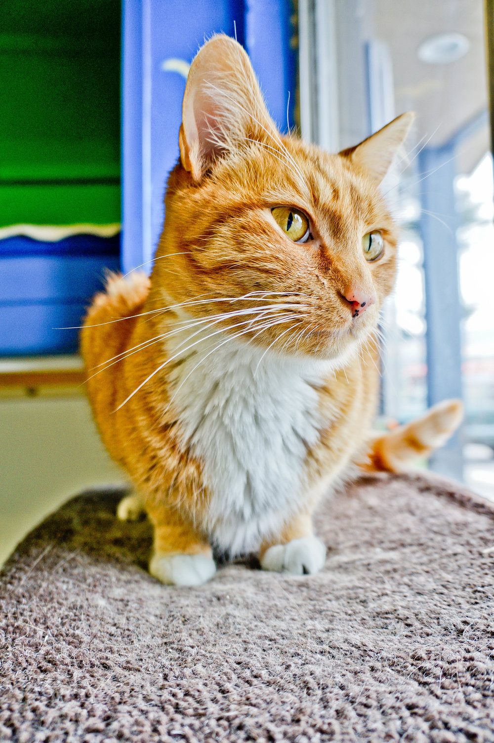 orange_cat.jpg