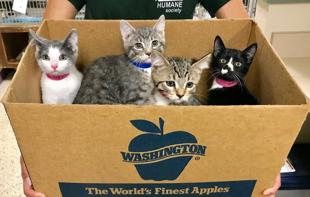 kittens-brought-to-shelter-in-applebox.jpg