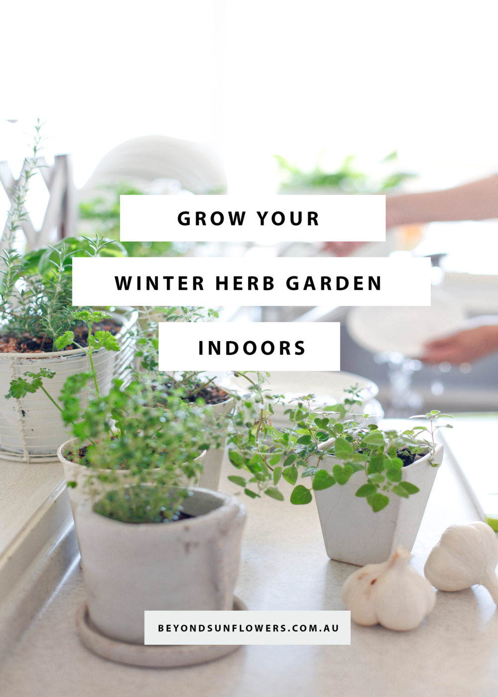grow your winter herb garden indoors u2014 beyond sunflowers
