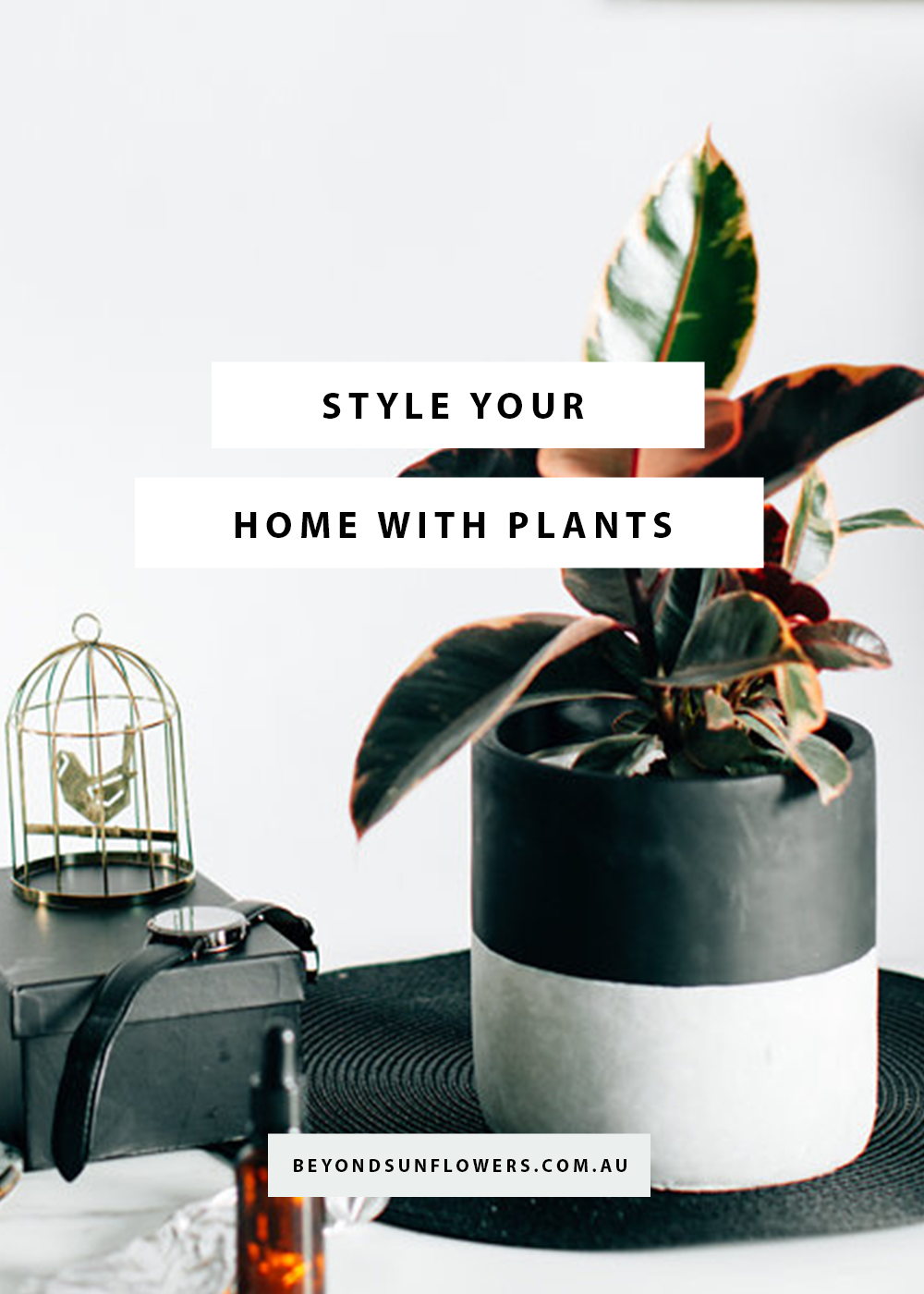 Greening the Great Indoors