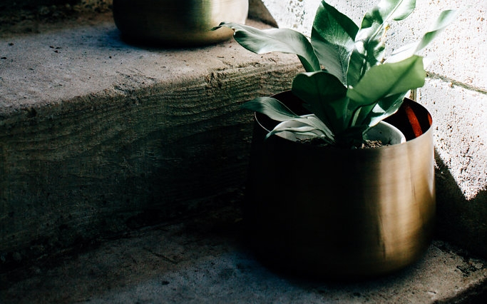 Welcome - Lets start greening the great indoors. Make your home feel alive and enjoy your urban oasis.