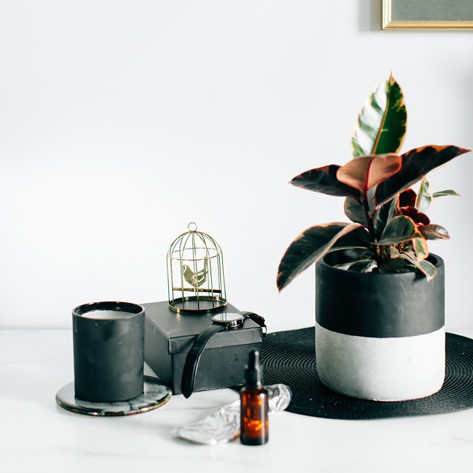 Pot Plants - Containers, pots and hanging baskets, what isn't to love. Lets warm up our green thumbs with these beauties.
