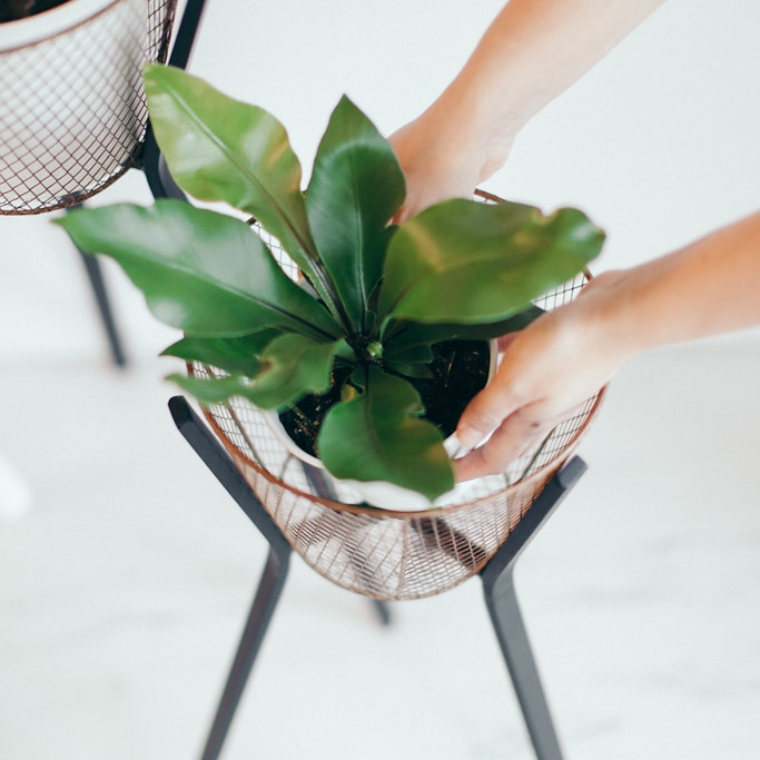 Plant Stands - We don't leave our favourite things laying around, so lets pick up our plants and raise them up, with some help of course.
