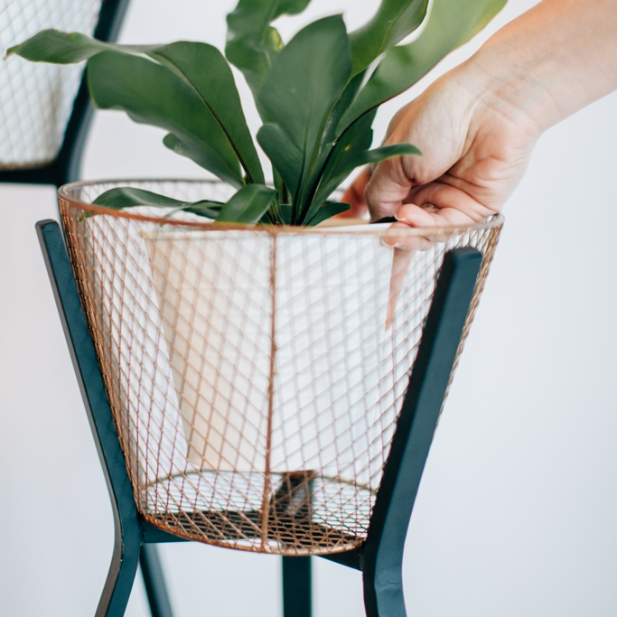 Plant Stands - We don't leave our favourite things laying around, so pick up our plants and raise them up, with some help of course.