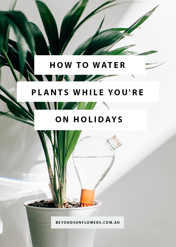 HOW TO WATER PLANTS WHILE YOU'RE ON HOLIDAYS