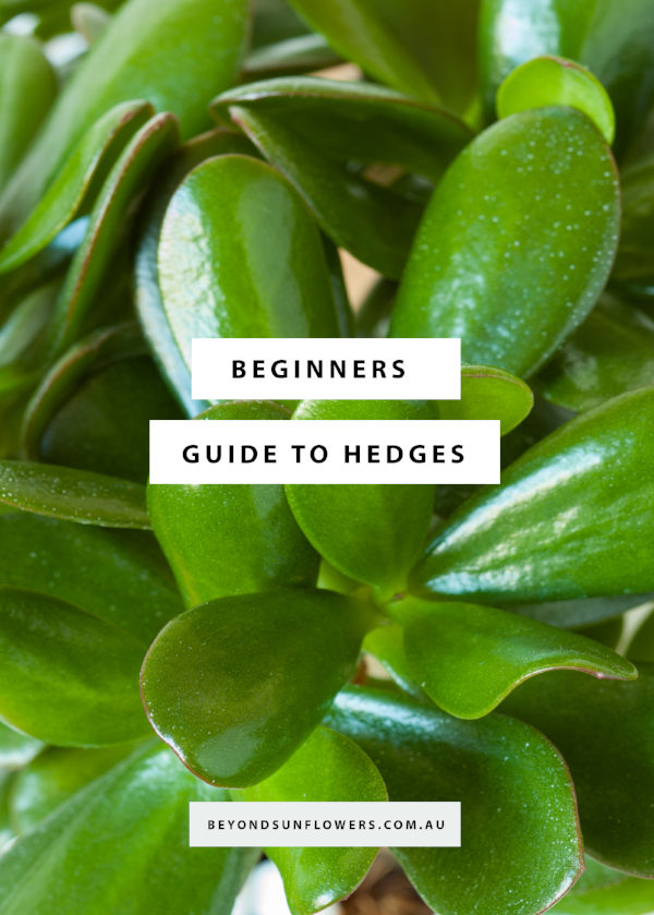 blogheader-Beginners Guide to Hedges.png