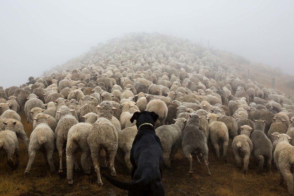 Beef and Lamb -
