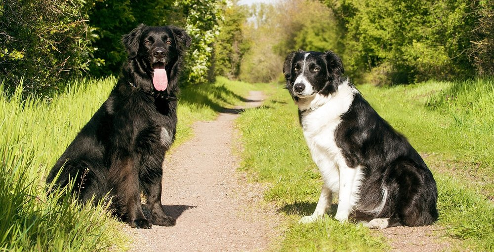 dogs-2286770_1920.jpg