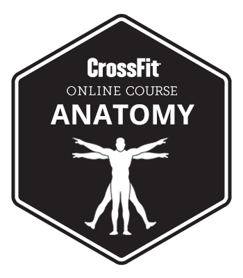 crossfit-anatomy