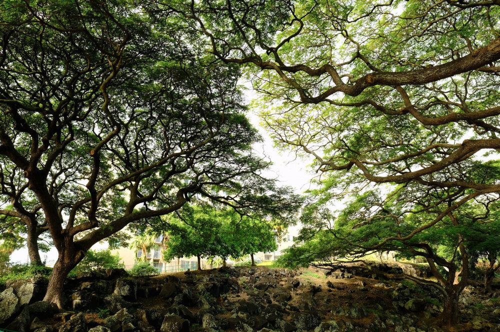 HAWAII DEC 261.jpg
