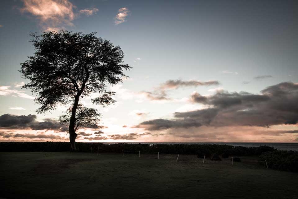 Ko'Olina-Tree-Silhouette.jpg