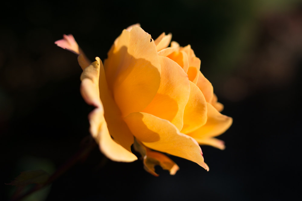 Yellow rose flower photo greeting card pretty greeting cards yellow rose flower photo greeting card mightylinksfo Choice Image