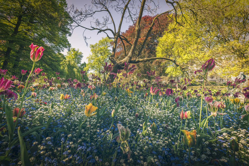 One afternoon after a days sightseeing we wandered a little bit further out to one of the fantastic parks. This is one of the very well tended flower beds with beautiful tulips.   12-24 f4 at 16mm, f8m 1/60, iso 100