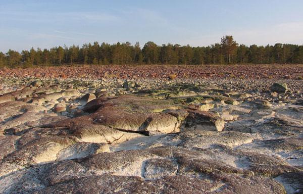 Norrfällsvikens naturreservat, Höga Kusten