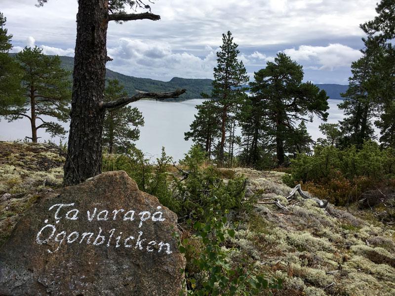 skovedberget-14.jpg