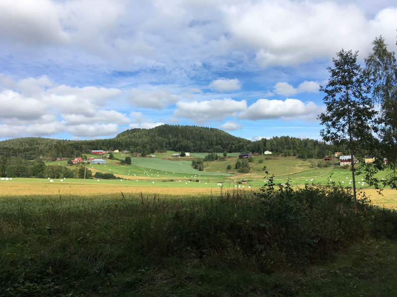 skovedberget-8.jpg