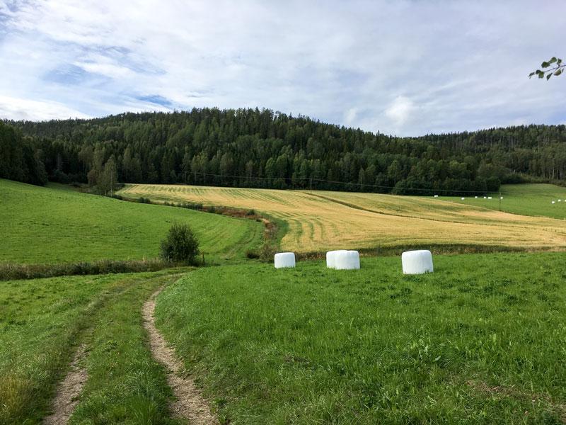 skovedberget-5.jpg