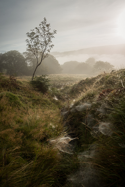 One of my favourites. The light on the inversion in the background gives the whole image a wonderful softness, and some of the elusive spider webs are just picking up the light.