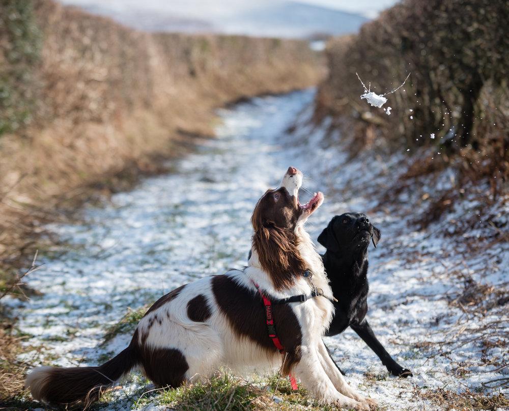 Dogs-Snow-2.jpg